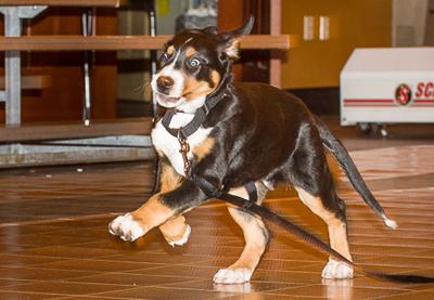 _CSG5621-crop puppy